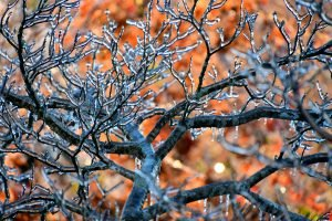 Winterizing your Detroit home includes trimming your trees and shrubs to avoid damge to the plants and to your house.